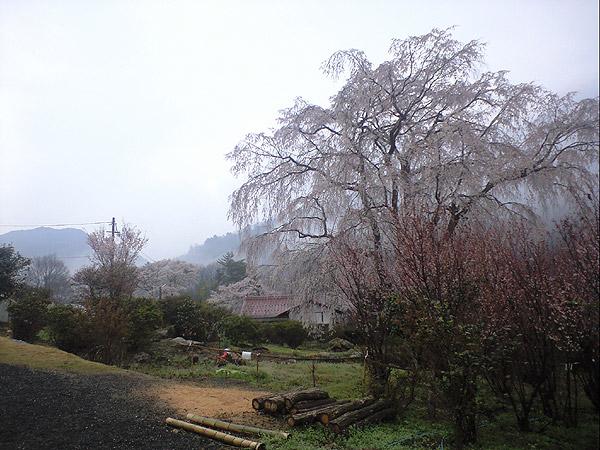 20090405-2.jpg